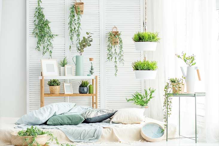 Comment végétaliser ses rebords de fenêtres selon les pièces ?